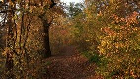 Дорожка в красивом лесе осени сток-видео