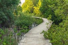 Дорожка вдоль леса мангровы в Таиланде Селективный фокус Стоковое Изображение