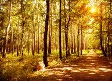 Дорожка в парке осени Стоковые Изображения