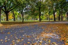 Дорожка в парке покрытом с упаденными листьями Стоковая Фотография RF