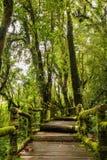 Дорожка в древесины Стоковое фото RF