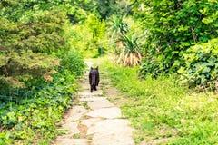 Дорожка в саде с прогулками кота вперед стоковые изображения