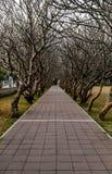 Дорожка в тени ветви Стоковая Фотография RF