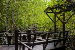 Дорожка деревянного моста в лесе мангровы на лесе Pranburi Стоковая Фотография RF