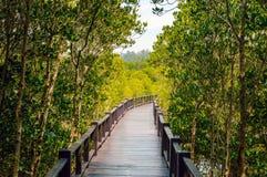 Дорожка деревянного моста в лесе мангровы на лесе Pranburi Стоковые Изображения