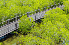 Дорожка деревянного моста в лесе мангровы на лесе Pranburi Стоковое Фото