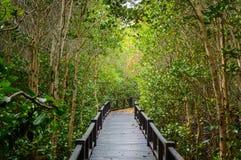 Дорожка деревянного моста в лесе мангровы на национальном парке леса Pranburi, Prachuap Khiri Khan, Таиланде Стоковое Фото