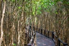 Дорожка деревянного моста в лесе мангровы на национальном парке леса Pranburi, Prachuap Khiri Khan, Таиланде Стоковые Фотографии RF