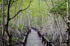 Дорожка деревянного моста в лесе мангровы на национальном парке леса Pranburi, Prachuap Khiri Khan, Таиланде Стоковая Фотография RF