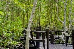 Дорожка деревянного моста в лесе мангровы на национальном парке леса Pranburi, Prachuap Khiri Khan, Таиланде Стоковая Фотография