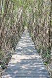 Дорожка деревянного моста в море с тоннелем дерева мангровы Стоковое Фото