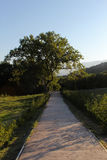 Дорожка и сиротливое дерево Стоковое Фото