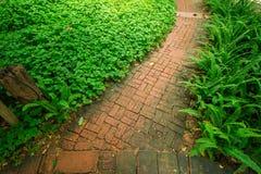 Дорожка кирпича и орнаментальные деревья Стоковые Изображения RF