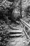 Дорожка к падениям Pearson Стоковая Фотография RF
