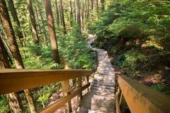 Дорожка леса около каньона Lynn в северном Ванкувере стоковые фотографии rf