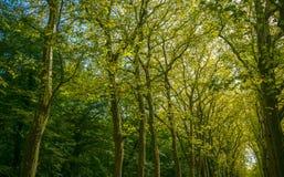 Дорожка, майна, путь с зелеными деревьями в лесе стоковое изображение rf