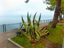 Дорожка на береге, озере Garda, Италии, Европе Стоковая Фотография