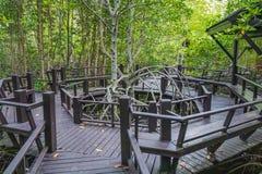 Дорожка на древесине стоковые фотографии rf