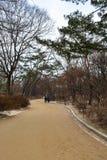 Дорожка на районе дворца Changgyeong Стоковое Фото