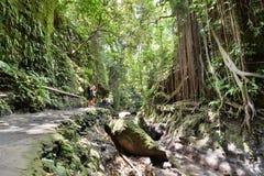 Дорожка около святой весны Деревня Padangtegal леса обезьяны Ubud тюкованный Индонезия стоковые изображения