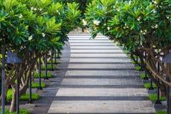 Дорожка покрытая деревом Plumeria Стоковая Фотография