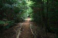 дорожка природы Стоковое Фото