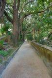 Дорожка пути в лесе Стоковое Изображение RF