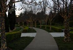 Дорожка с деревьями с fairy светами Стоковая Фотография