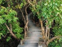Дорожка с деревянным мостом через мангрову forrest Стоковые Изображения RF