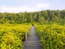 Дорожка с деревянным мостом через мангрову forrest Стоковое Изображение