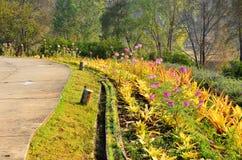 Дорожка цветка Стоковые Изображения RF