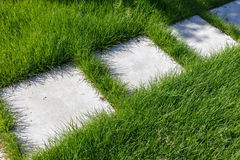 Дорожка цемента и зеленая трава Стоковое Фото