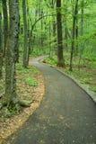 Дорожка через древесины Стоковая Фотография RF