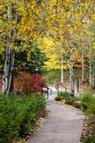 Дорожка через осины Стоковое Изображение