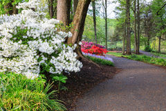 Дорожка через сад весны Стоковое Изображение