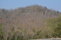 Дорожка яркого ого-зелен леса естественная в свете солнечного дня Лесные деревья солнечности Солнце через лес яркого зеленого цве Стоковое фото RF