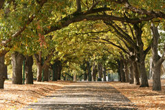 дорожка melbourne садов carlton Австралии Стоковые Изображения RF