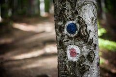 Дорожные знаки леса Стоковое Изображение