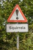 Дорожный знак белки стоковая фотография rf