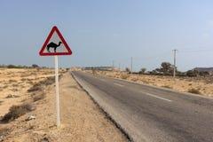 Дорожный знак: Остерегитесь верблюдов Стоковые Фото