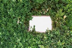 Доска в зеленой изгороди Стоковые Фото