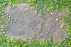 Доска завода каменная. Стоковая Фотография RF