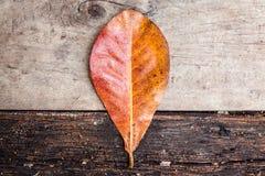 Доска лист и древесины Стоковая Фотография RF