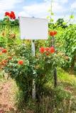 доска и куст роз около виноградника в Эльзасе Стоковое Изображение