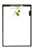 Доска сзажимом для бумаги с ягодами Стоковые Изображения RF