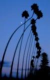 достигаемость луны Стоковые Фото