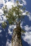 достижение неба Стоковая Фотография