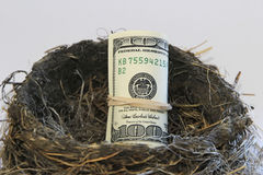 Долларовые банкноты в гнезде птицы Стоковая Фотография RF