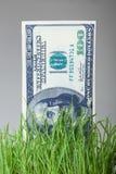 Долларовые банкноты растя в зеленой траве Стоковая Фотография