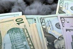 Доллары крупного плана Стоковое Изображение